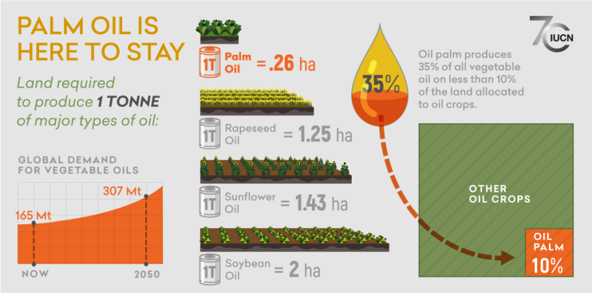 Infographic showing the environmental impact of palm oil by stating that the global demand for vegetable oils is increasin and palm oil can produce 1 tonne of oil in 0.26 hectares of land whereas other oils like soybean needs more land, about 2 hectares. The infographic also shows that palm oil crops produce 35% of all vegetable oil on less than 10% of the land allocated to oil crops.